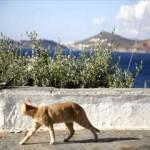 ギリシャ-風景-猫