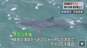 茨城県-鮫-20150805