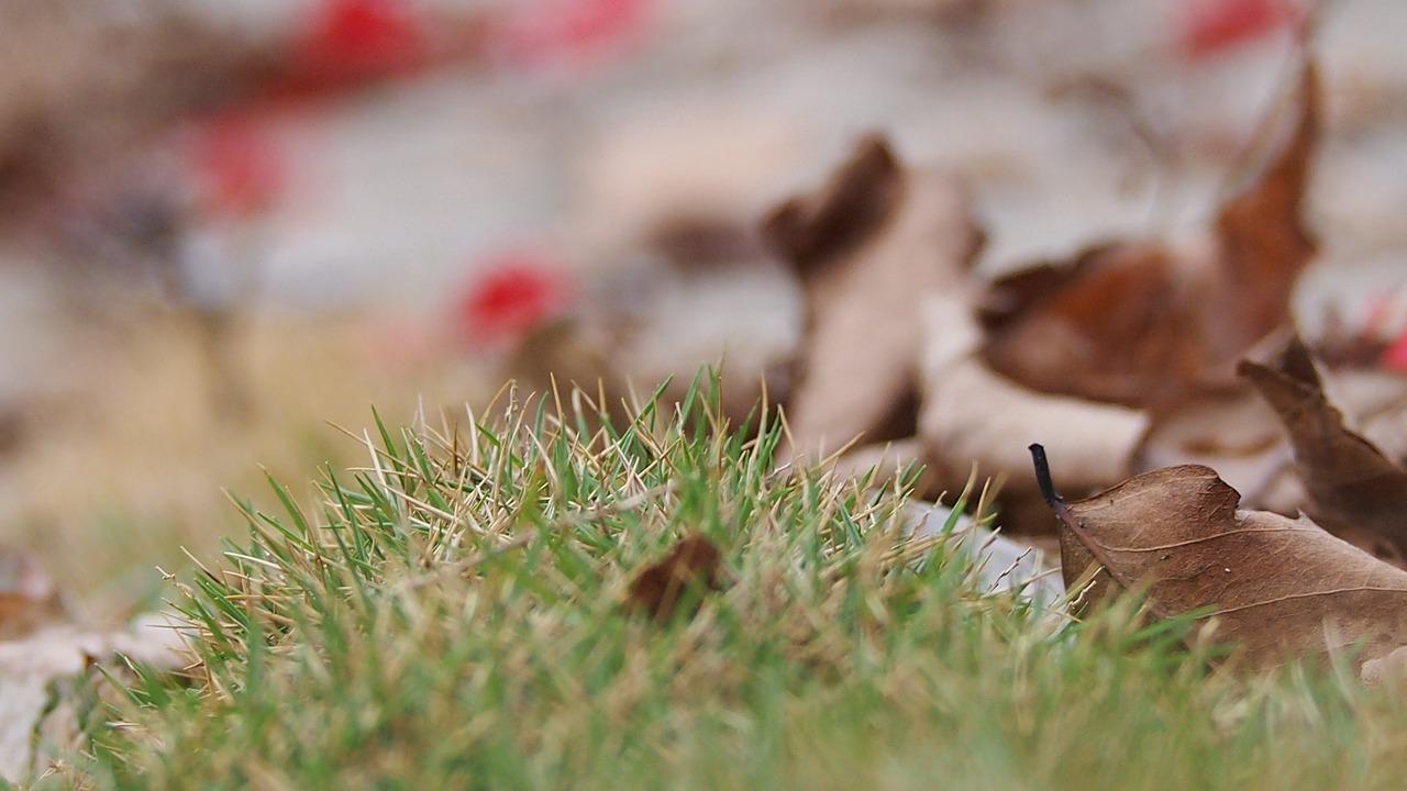落ち葉 掃除